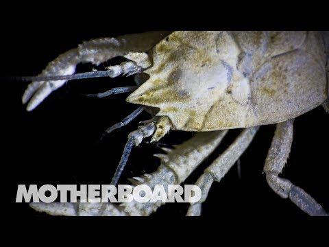The Invisible Creatures at the Bottom of the Sea